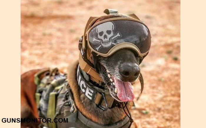 پوشش محافظ گوش؛ ابتکار ارتش آمریکا برای سگ های نظامی(