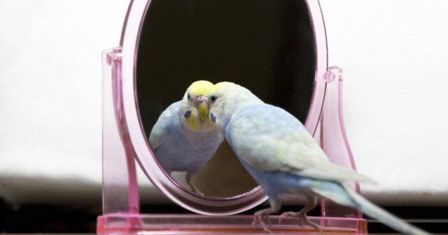 پرندگان هوشمند هستند و حتی شاید خویشتن آگاه باشند!