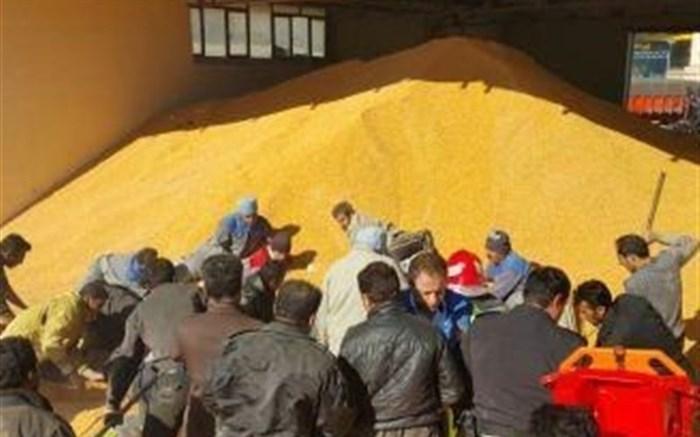 اختیار صادرات و واردات نهاده های دامی به وزارت جهاد کشاورزی واگذار شد