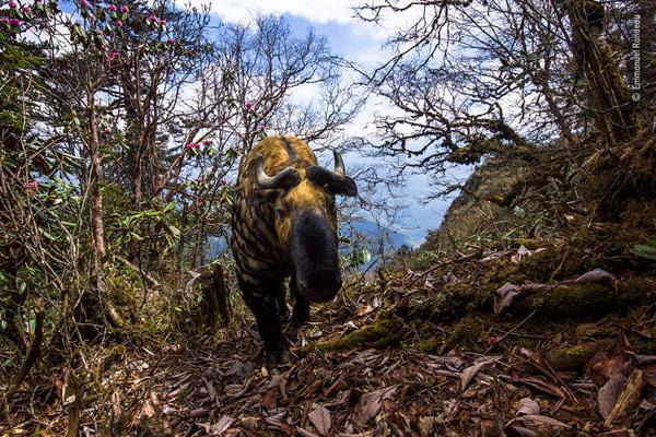 عکس های برگزیده حیات وحش در 2020 به انتخاب گاردین