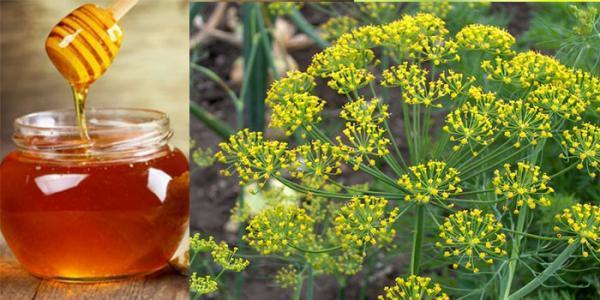 خواص عسل شوید و کاربردهای دارویی آن